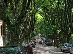 The world's most beautiful street;   This gorgeous green street is the Rua Gonçalo de Carvalho in Porto Alegre, Brasil, and is declared historical heritage.