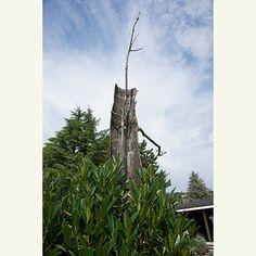 Risultati immagini per giuseppe penone albero
