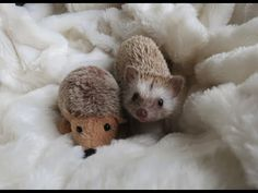 Roly-Poly Hedgehogs Loving Life in the City