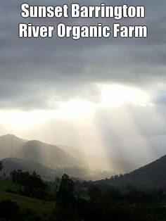 Sunset Barrington River Organic Farm #sunset #farmlife #certifiedorganic
