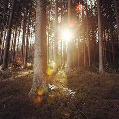 #nachmittag #lichtenberg #linz #lnz #austria #umland #linzpictures #diebestenbilderderstadt #wildlife #sunny #afternoon #wald #wood #holidays #urlaub #wandern #freizeit #mühlviertel #landleben