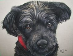 Henry ~ 8x10 Derwent Pastel on Velour