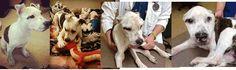 Petition Update · The Craigslist Dog Killer · Change.org