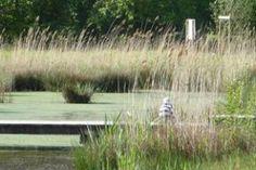 Award Winning Small Garden Design - Landscape Architects Network