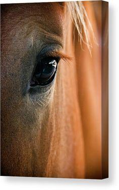 All The Pretty Horses, Beautiful Horses, Animals Beautiful, Beautiful Eyes, Simply Beautiful, Horse Photos, Horse Pictures, Equine Photography, Animal Photography
