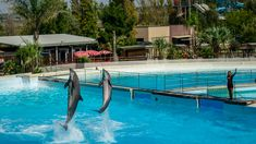 Inaugurated in September Zoomarine is an amusement park located in Central and Southern Italy. If you get here you must not miss the Zoomarine dolphinarium. Rome Attractions, Best Stocks, Southern Italy, Amusement Park, Vector Art, Travel Photos, Swimming Pools, Photo Galleries, Surfing