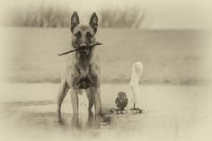Ingo and friends - Ingo und Else - picture by Tanja Brandt