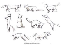 Cat reference Find more at https://www.facebook.com/CharacterDesignReferences if you are looking for: #art #character #design #model #sheet #illustration #best #concept #animation #drawing #archive #library #reference #anatomy #traditional #draw #development #artist #animal #animals #felines #cats #cat