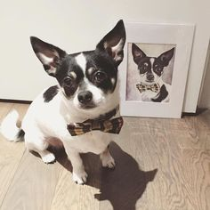 Petey Pablo and his Hoyt Bow Tie are immortalized in ART!  Repost @petey_pablo_the_dog  Every time I do something bad this poor portrait will grow uglier. But for now it's a perfect likeness so super thanks to @elysebrandau   #dogsinbowties #bowtie #dogbowtie #dapperdog #brooklyn #handmade #shopsmall #brooklynbowtied #madeinbrooklyn #rescuedog #adoptdontshop #etsy #dogsofbrooklyn #dogsofinstagram #etsygifts #barkbox #calledtobecreative #marthastewartpets #ohwowyes #dogsinbetween #ruffpost…
