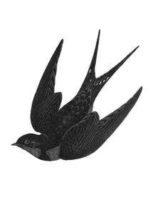 bird artwork - Free Image on Pixabay Swallow, Bird, Nature, Fauna Art And Illustration, Gravure Illustration, Vintage Bird Illustration, Free Illustrations, Golondrinas Tattoo, Swallow Bird Tattoos, Tattoo Bird, Swift Bird, Barn Swallow