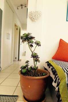 Glencairn Nature Retreat - The Lazy Landlord Double Beds, Being A Landlord, Cosy, Planter Pots, Living Room, Nature, Full Beds, Naturaleza, Home Living Room
