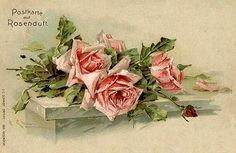 Artist Postcard Klein, Catharina, Rosen mit Tautropfen, rosa Blüten buy now for only - postally used excellent condition Catherine Klein, Shabby Flowers, Pink Flowers, Pink Roses, Rose Sketch, Flower Artists, Floral Artwork, Flower Bird, Floral Illustrations