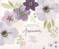 Anemones Watercolor Flowers CLIPART bright - Handpainted flowers, Wedding Florals, Wedding Invitations, DIY Invitation, Watercolor Flowers