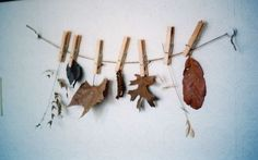 Cool idea to display nature finds or fall leaves!