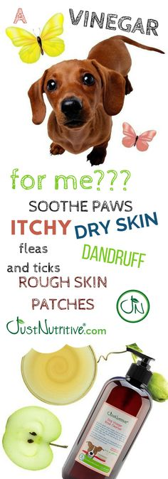 due to its detoxifying properties another benefit is its effect on a dog s skin and coat since it is anti bacterial anti fungal and antiseptic