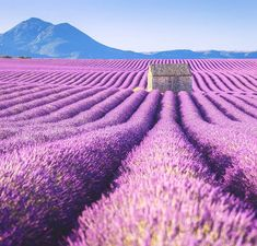 Aurélien Billois spent three days in the region of Valensole, discovering lavender fields. The series is incredibly beautiful, thanks to a worldwide unique lan Monuments, Places Around The World, Around The Worlds, Studios Architecture, Man Photography, Travel Photography, Design Blog, Plan Design, Lavender Fields