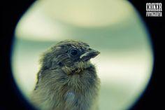 Birds Baby