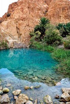 A Canyon Oasis In Baja California California The Oasis
