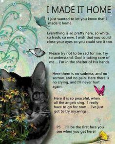 Image result for cat heaven poem
