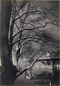 Les arbres des quais avec le Pont-Neuf, Brassaï