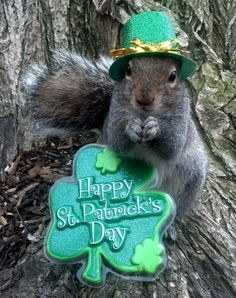 Happy St.Patricks day Sue and all the Feelin' Squirrelly peeps on here!