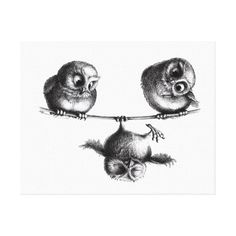 Three Owls - Freedom and Fun Canvas Print