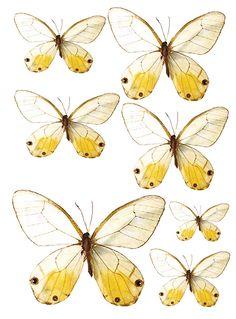 Swirlydoos: Forums / Images  Graphics / Butterflies