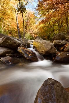 This is what we love about the fall season in the Smoky Mountains.