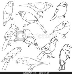 Simple line drawings of birds. Draw like an artist Art Ed Central loves. Drawing Sheet, Painting & Drawing, Simple Line Drawings, Art Worksheets, Bird Drawings, Drawing Lessons, Illustrations, Bird Species, Art Classroom