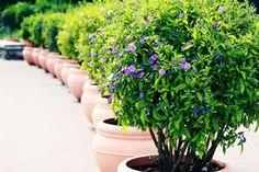 Die 16 Besten Bilder Von Winterharte Pflanzen Deck Garden Plants
