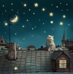 What is that cat doing in my dreams?