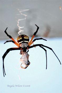 Spider  by angeldewdrps, via Flickr