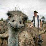 Emù a sorpresa! #australia