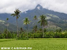 Caibiran, Biliran Island is part of the beautiful tropical Philippines paradise of Biliran Province. Caibiran Municipality has large flat rice fields surrounding the town of Caibiran, and on the sides of surrounding Volcanic Mountains you find find popular tourist attractions such as Tinago Falls and Mainit Hot Springs. Caibiran Municipality is joined to the capital town of Naval by the long Biliran Cross Country Road.
