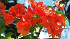 1331 Meilleures Images Du Tableau Fleurs Tropicales En 2019 Exotic