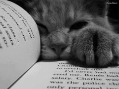 Oh, #LiteraryCat, you GET me.