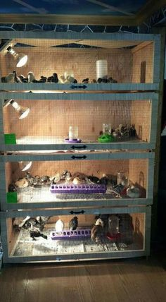 Got limited space? Have each week's hatchlings together. Have 4 tall then week 5 transition them to brooder with run and partial access.