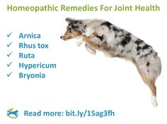 Help you dog be more active this summer! Discover how homeopathy can ease your dog's joint pain.