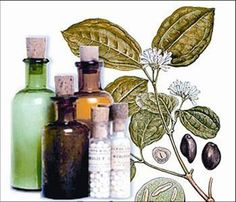 Cómo tomar la Homeopatía