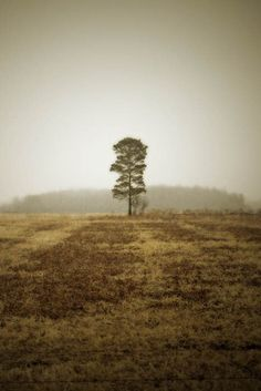 landscape photography solitary tree brown by judeMcConkeyPhotos, $35.00