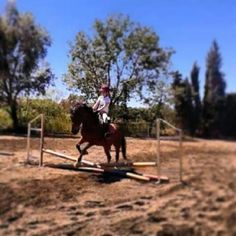#Jumping #horse #brown #spain #catalonia #BCN #viladecans #hipic  + photos --> INSTAGRAM--> FOLLOW PLIS -> jordimariscal10