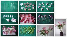 Nerium oleander - Leander - https://www.facebook.com/Csodavirag