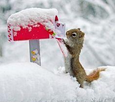 80+ idées de Les animaux à la neige | animaux, neige, photo animaux