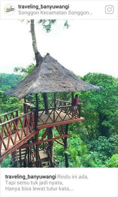 Rumah Pohon Hutan Mangaran Songgon kecamatan Songgon Banyuwangi Indonesia