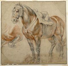 Peter Paul Rubens, Gesatteltes Pferd mit Detailstudie, c. 1615-18. Schwarze Kreide, Rötel, mit weißer Kreide gehöht © Albertina, Wien