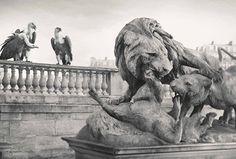 Des animaux envahissent la capitale pour l'ouverture du Zoo de Paris !