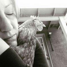 Unconditional chicken love... awww...