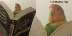 """24 High Quality Birb Memes That Will Elevate Your Mood - Funny memes that """"GET IT"""" and want you to too. Get the latest funniest memes and keep up what is going on in the meme-o-sphere. Funny Animal Memes, Funny Animal Pictures, Cute Funny Animals, Stupid Funny Memes, Cute Baby Animals, Funny Cute, Funniest Memes, Memes Humor, Memes Br"""