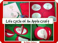 life cycle of an apple craft. Perfect for our unit right before going to the orchard!