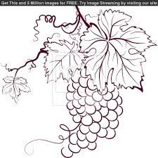 grape leaf botanical illustration - Google Search